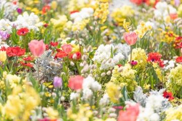 spring201943FTHG7165_TP_V